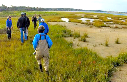people walking in a marsh